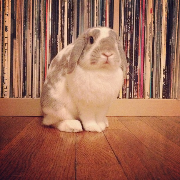 I Would Never Chew on Your Record Collection, Hoomin!