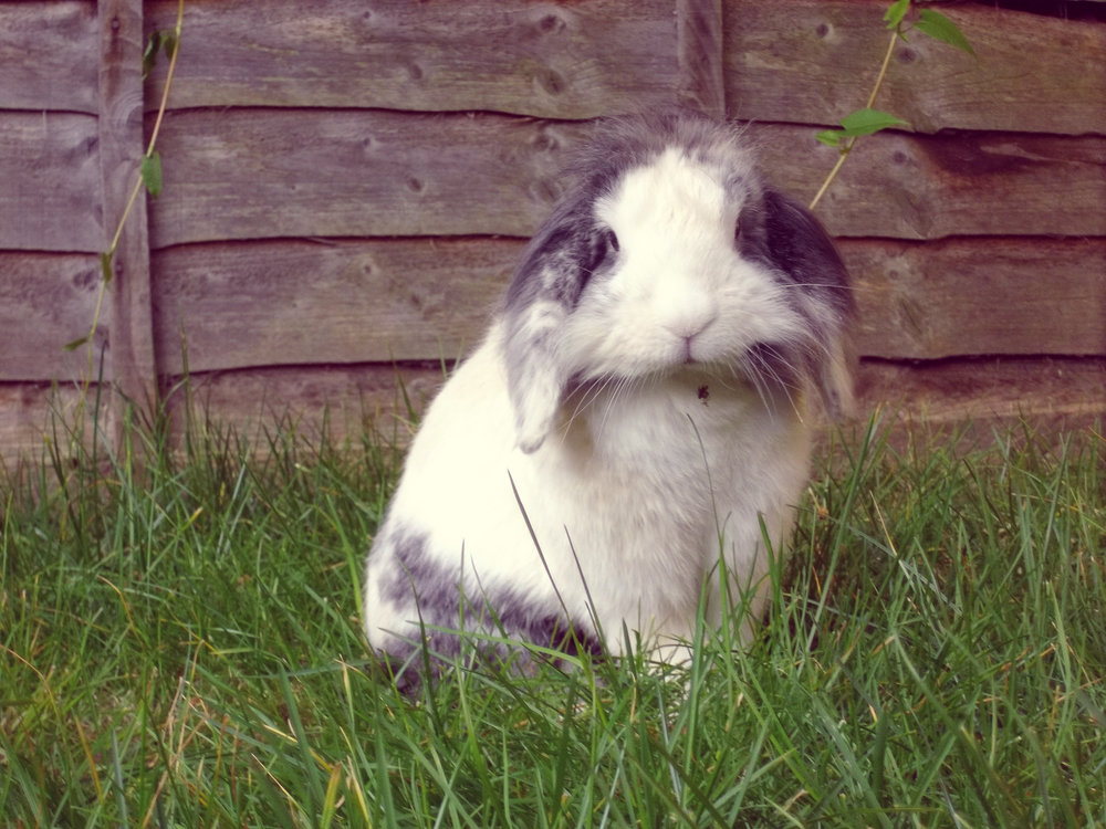 Bunny Poses for a Picture before a Wild Romp