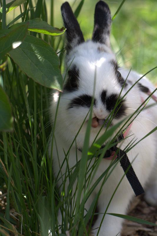 This Grass Tastes Funny!