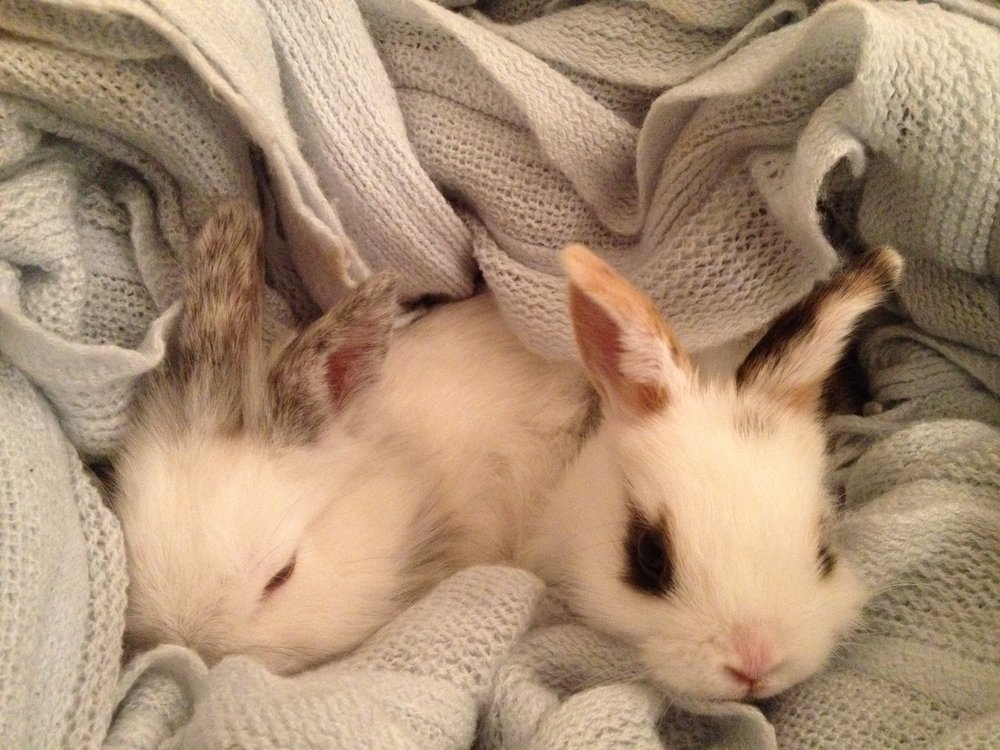 Cozy Bunnies Are Cozy