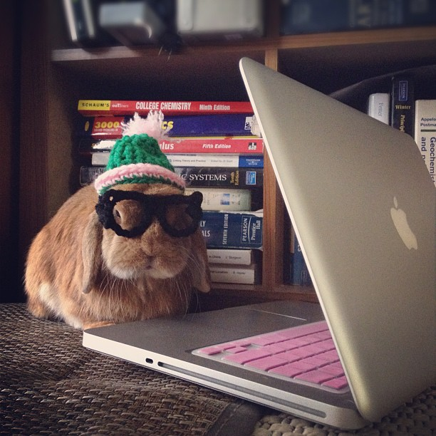 Hipster Bunny's Got the Look Down