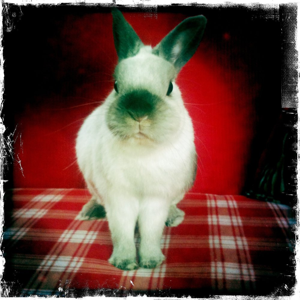 "Stern Bunny Says ""Dinner. Now."""