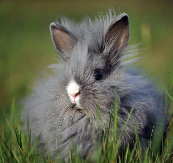 Super-Fluffy Bunny Enjoys Outdoor Time