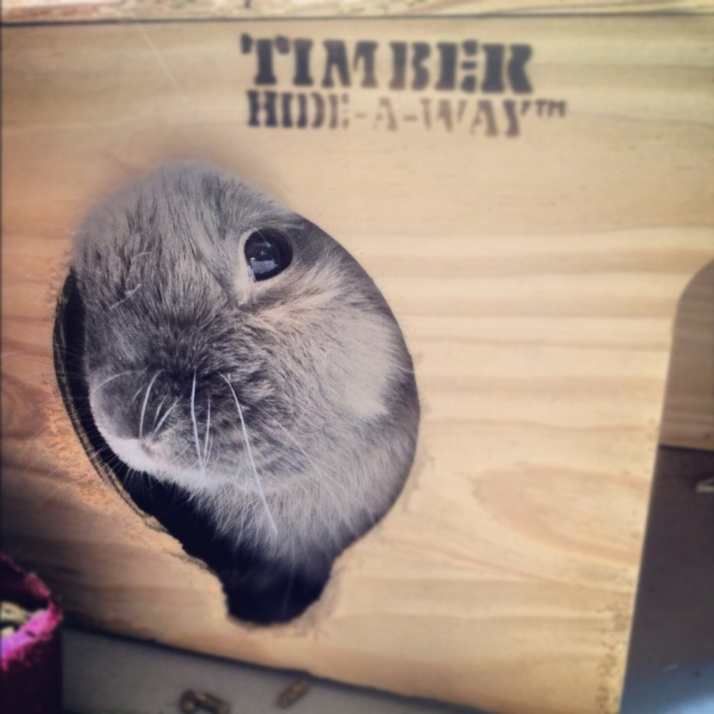 Bunny Peeks Out from His Hideaway