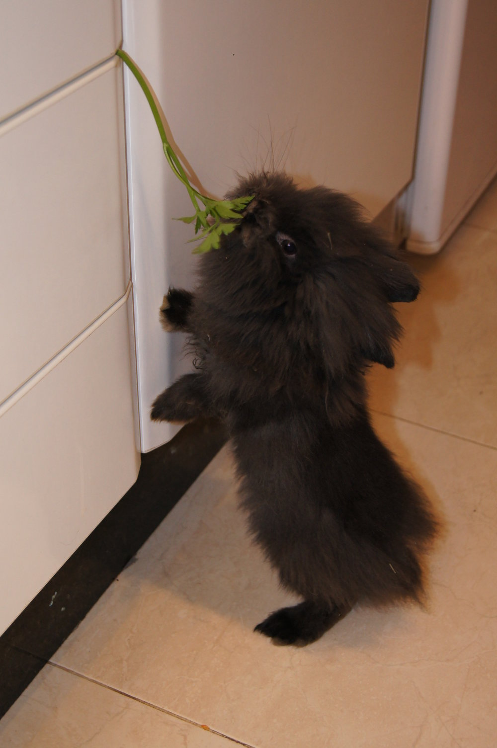 Some Parsley Got Stuck? I'll Help! I'll Help!