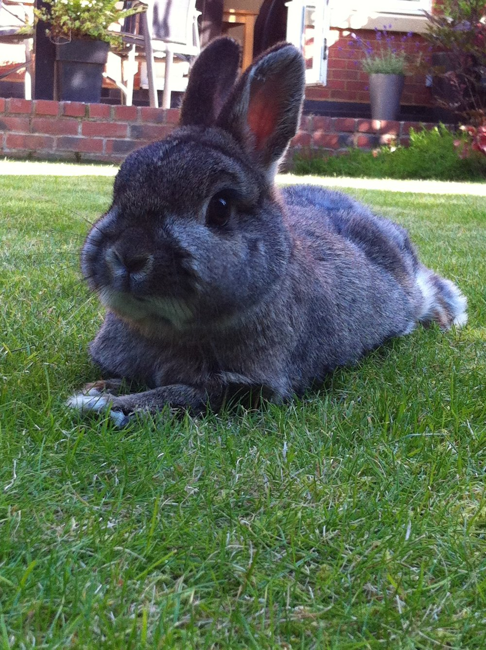 Bunny Spends Bunday Relaxing on the Grass
