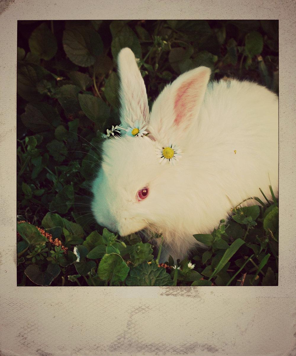 Bunny Wears a Crown of Flowers