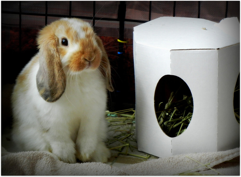 Bunny Stands Watch Over His Hay