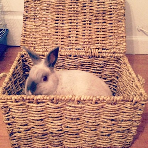 Bunny Stows Away in the Picnic Basket