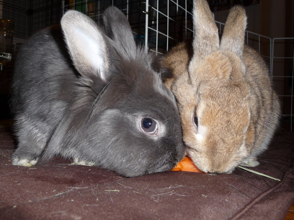 Bunnies Try to Share Now That They're Brothers