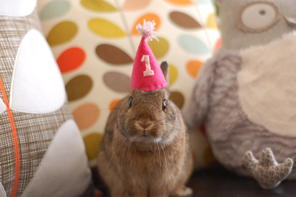 It's Bunny's First Birthday!