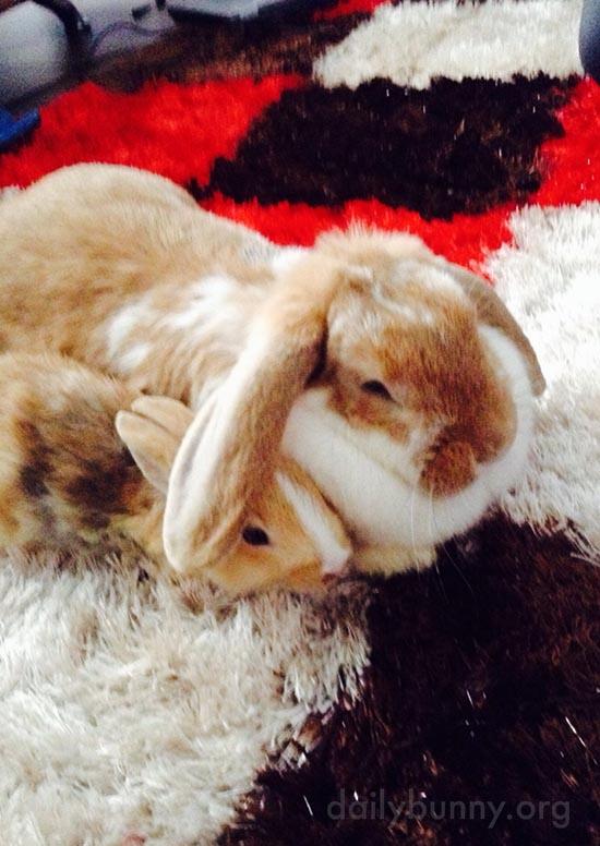 Bunny Lends Her Friend Her Ear