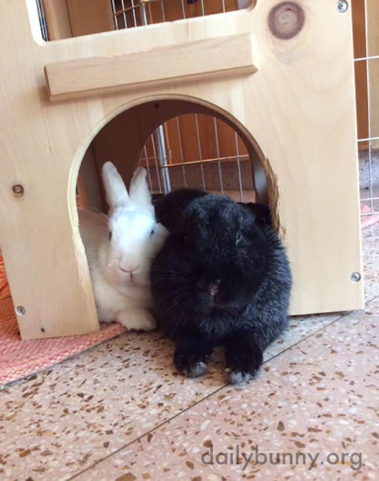 Bunnies Get Snuggly at the Door of Their Castle