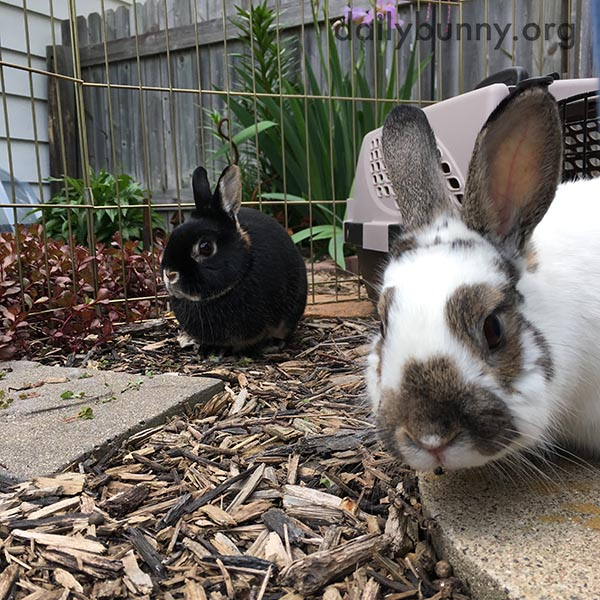 Bunnies Go on an Outdoor Date 1