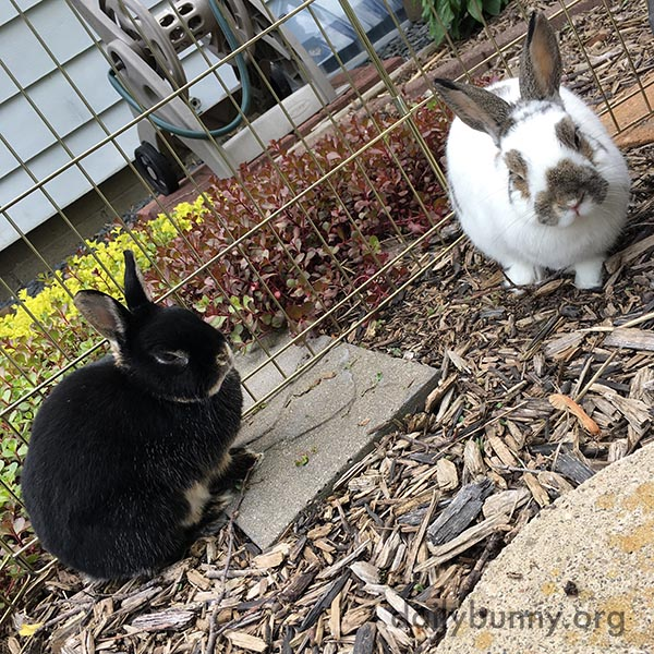 Bunnies Go on an Outdoor Date 2