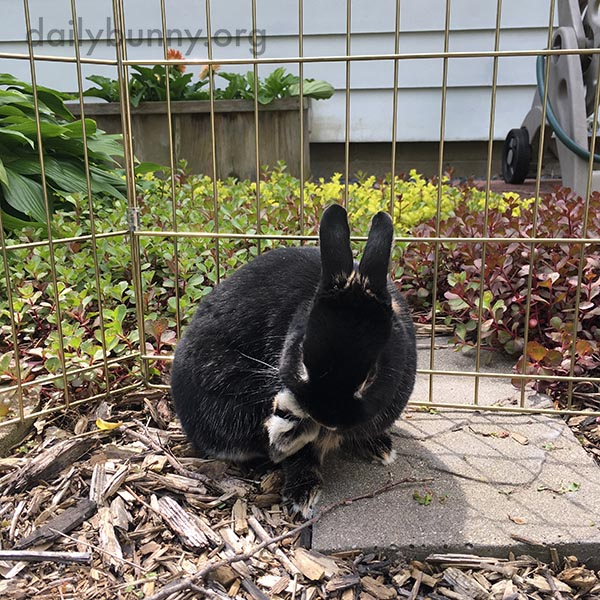 Bunnies Go on an Outdoor Date 3