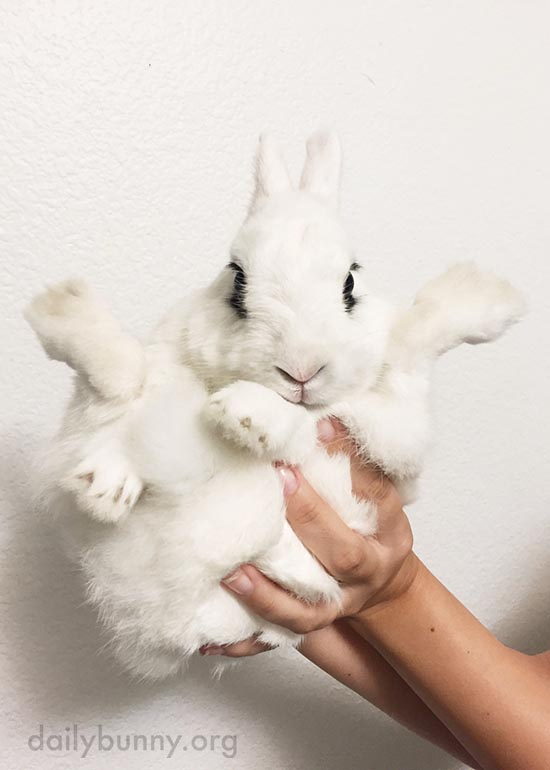 Two Big Handfuls of Fluffy Bun