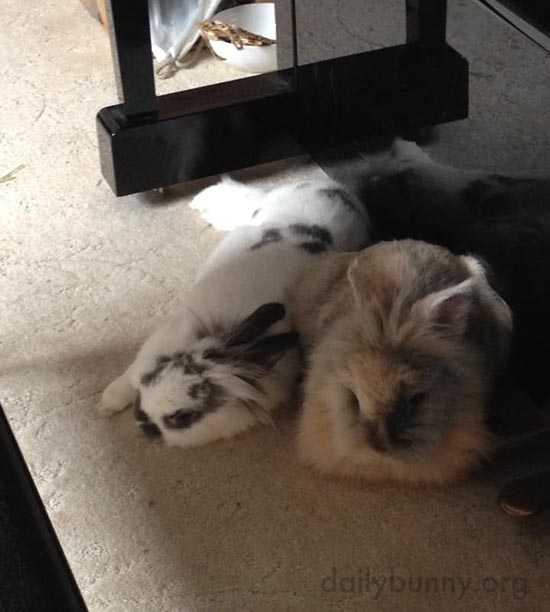 Bunnies Like to Relax to a Little Piano Music - So Get Playing, Human!