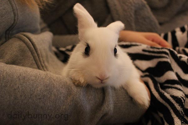 I'm Having Cuddles with Human!