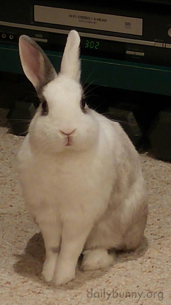Poised Bunny Sits So Nicely for a Photo