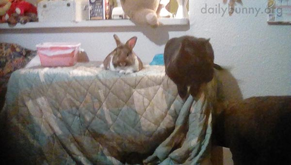 Bunny and His Cat Friend Gossip About Human