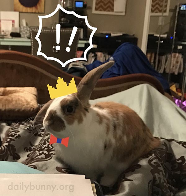 Bunny, Are You a King? A Dapper Businessman? Both?
