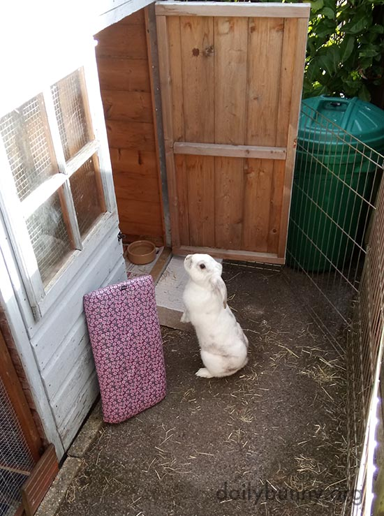 Bunny Checks out the Outdoor Digs 1