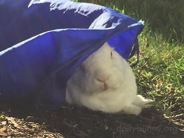 Bunny Gets Some Shade in Her Tunnel