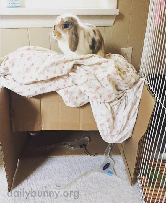 Things Look a Little Different from up on the Box, Don't They, Bunny?
