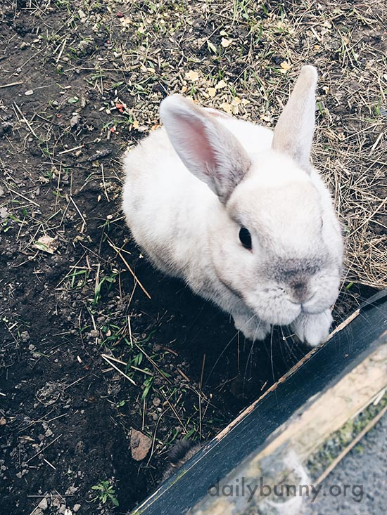 Bunnies Hang Out in Their Outdoor Pen 3