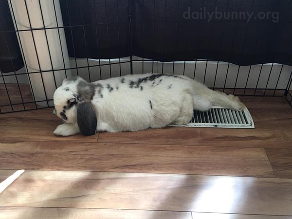 Bunny Sure Knows How to Relax on a Hot Day 1