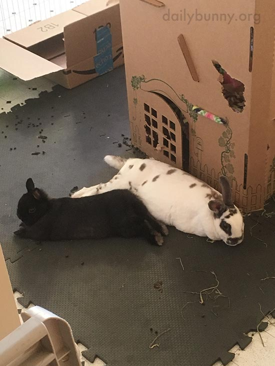 Bunnies Relax After Some Difficult Demolition Work 1