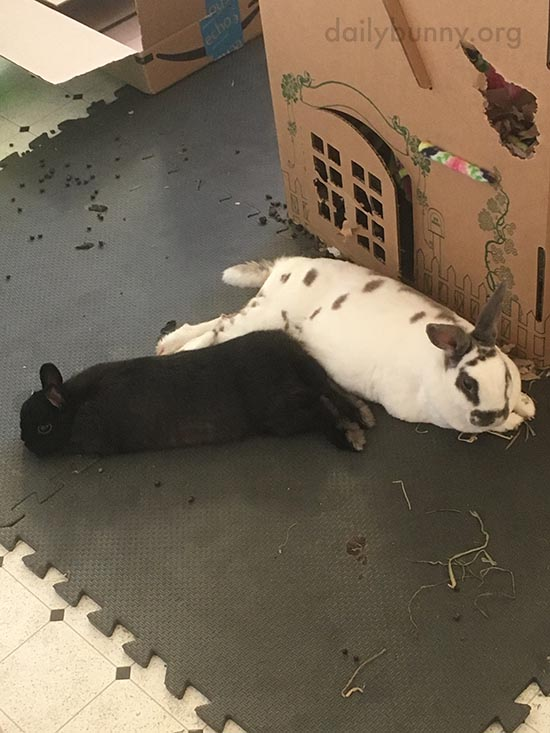 Bunnies Relax After Some Difficult Demolition Work 2