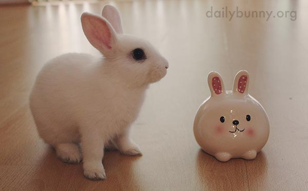 Human, Have You Ever Seen Such a Round Bunny?