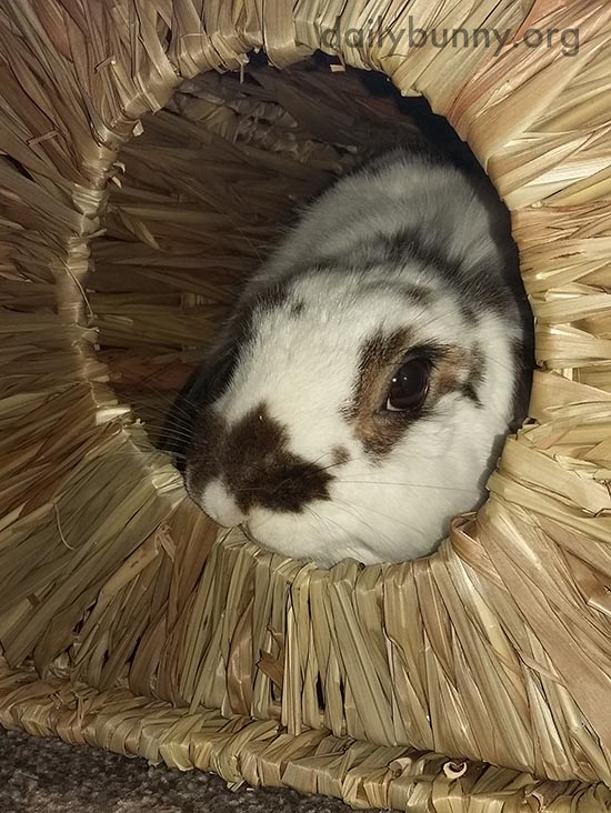 Bunny Cozies Up in Her Tasty Hut