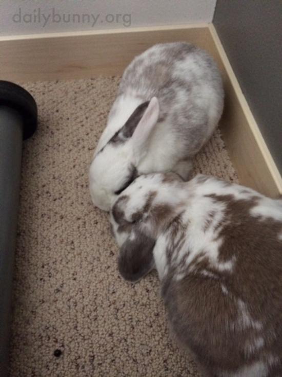 Bunnies Like to Cuddle Cheek-to-Cheek 1