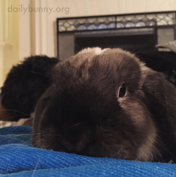 Bunny Snuggles Up to Human for Some Quiet Cuddles