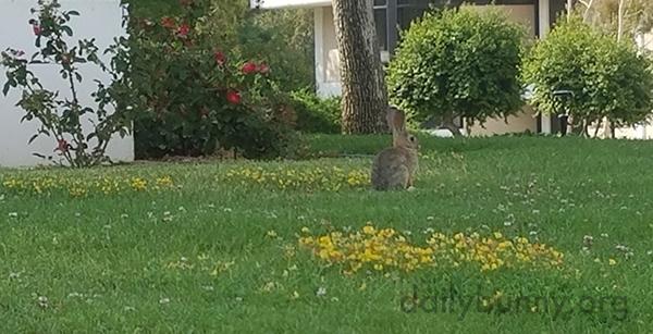 Bunny Senses Humans Behind Her