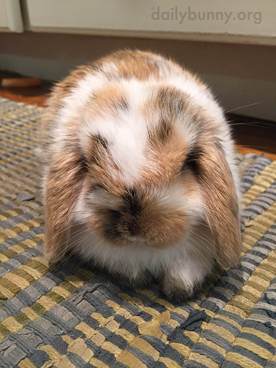 Bunny Is Clearly Ready for Head Scratches, Please