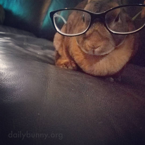 Bunny, You Look Very Intellectual But I Think You Ate What You Were Reading