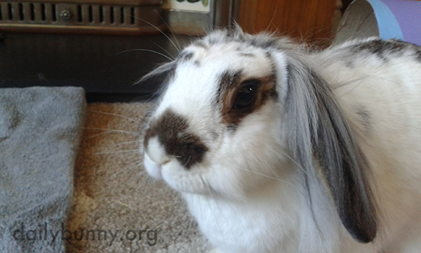 What Fashionable Ear Fur You Have, Bunny!