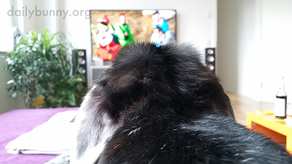 Bunny, the Fur on the Back of Your Neck Is Sooo Soft