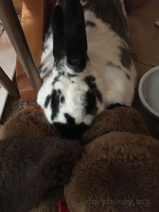 Bunny and His Stuffed Pal Are Inseparable 1