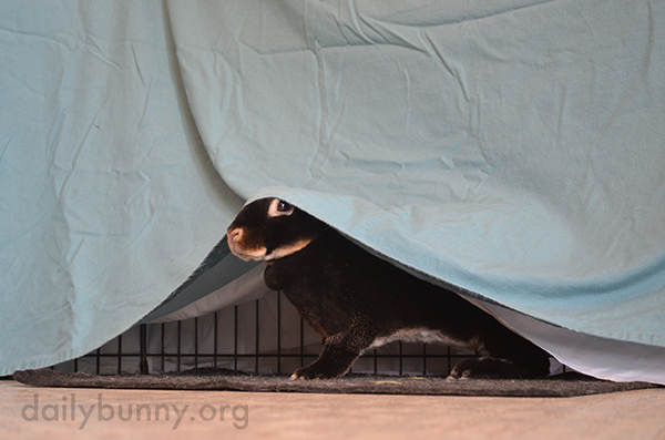 Having Been Spotted, Bunny Gives Up Her Hiding Place 1