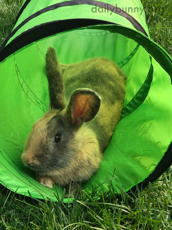 Even Though Bunny's Comfy in His Tunnel, He's Still a Careful Listener