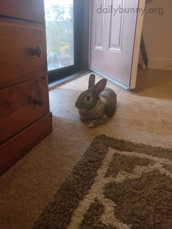 Bunny Is an Expert Lounger 2
