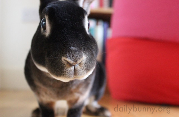 Bunny Is Curious About That Weird Thing Human's Holding