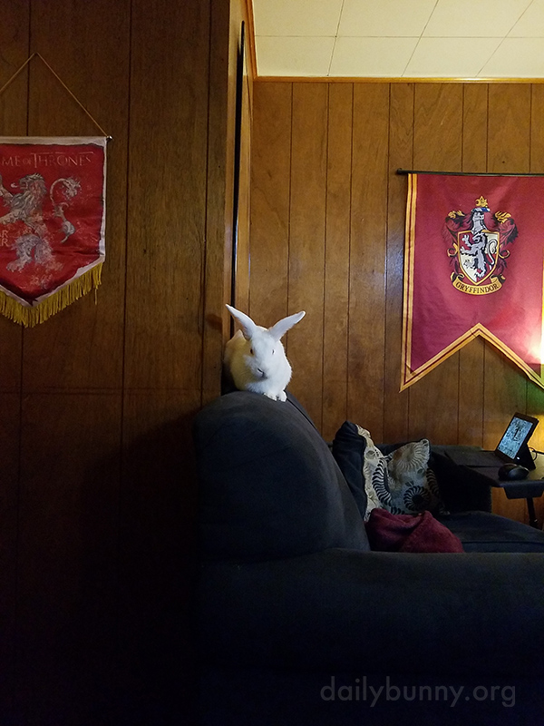 From This Vantage Point, Bunny Can Supervise All the Goings-On