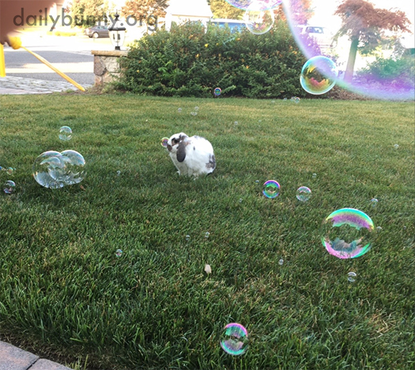 Bunny Seems Unfazed by Bubbles 1