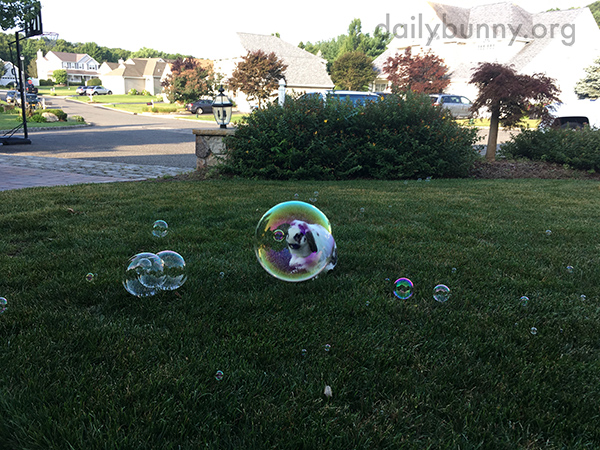 Bunny Seems Unfazed by Bubbles 2